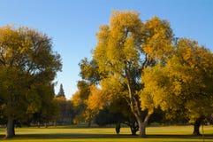 Árboles de olmo de la caída del campo de golf Foto de archivo libre de regalías