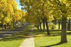 Árboles de olmo en el otoño 1 imagen de archivo libre de regalías