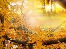 Árboles de oro del otoño Imagen de archivo libre de regalías