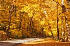 Árboles de oro del otoño Fotos de archivo libres de regalías
