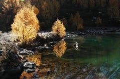 Árboles de oro por el lago Imagenes de archivo
