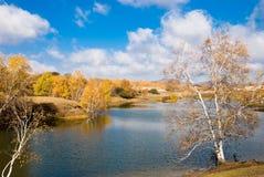 Árboles de oro por el lago tranquilo Imágenes de archivo libres de regalías