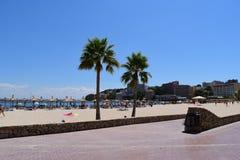 Árboles de Palma en la playa de Mallorca Imagenes de archivo