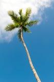 Árboles de palmas en la playa Fotografía de archivo libre de regalías