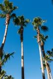 Árboles de palmas en la playa durante Imágenes de archivo libres de regalías