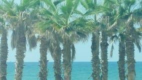 Árboles de palmas por la playa foto de archivo