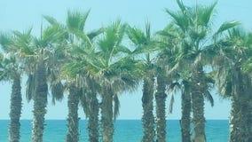 Árboles de palmas por la playa fotografía de archivo libre de regalías