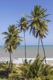 Árboles de palmas tropicales de coco en la playa que hace frente al mar durante el verano Fotos de archivo