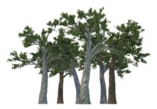 Árboles de pino aislados en blanco Fotografía de archivo