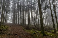 Árboles de pino altos de la imagen y una trayectoria de una perspectiva más baja en el bosque imágenes de archivo libres de regalías