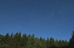 Árboles de pino con las estrellas Imagenes de archivo