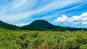Árboles de pino con las nubes abeautiful en el cielo fotografía de archivo libre de regalías