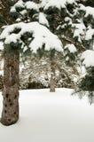 Árboles de pino cubiertos en nieve Imagen de archivo
