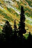 Árboles de pino de la silueta Autumn Mountainside imágenes de archivo libres de regalías
