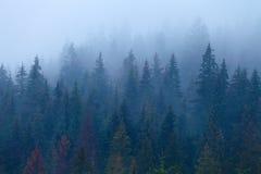 Árboles de pino de niebla en cuesta de montaña Imagenes de archivo