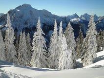 Árboles de pino del invierno Imágenes de archivo libres de regalías