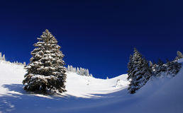 Paisaje del invierno - árboles de pino Fotos de archivo