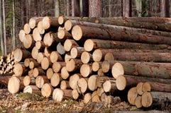 Árboles de pino derribados Fotos de archivo libres de regalías
