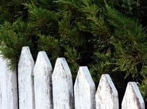 Árboles de pino detrás de la cerca vieja blanca (Foco selectivo en los árboles) Fotografía de archivo