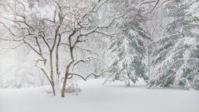 Árboles de pino en el Central Park Nueva York Foto de archivo libre de regalías
