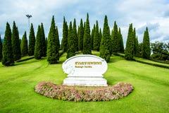 Árboles de pino en el chiangmai real Tailandia del jardín de la flora Imagen de archivo