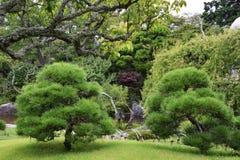 Árboles de pino en el jardín japonés Imágenes de archivo libres de regalías