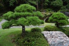 Árboles de pino en el jardín japonés Imagen de archivo libre de regalías