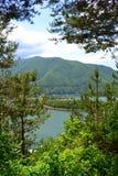 Árboles de pino en el lado del lago Imagen de archivo libre de regalías