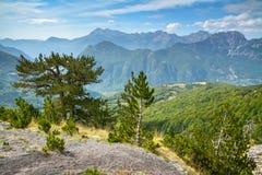 Árboles de pino en la cuesta, montañas en el fondo fotos de archivo