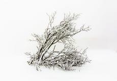 Árboles de pino en la nieve delante de una ventisca Fotos de archivo libres de regalías