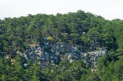 Árboles de pino en la roca Fotos de archivo