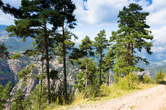 Árboles de pino en las montañas contra vista Imagenes de archivo