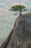 Árboles de pino en las rocas de Demirji, Crimea Foto de archivo