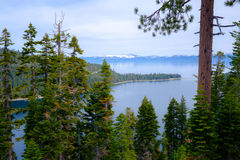 Árboles de pino en los bancos del lago Tahoe, California fotos de archivo libres de regalías
