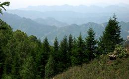 Árboles de pino en montañas Imagen de archivo libre de regalías