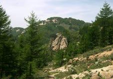 Árboles de pino en montañas Fotos de archivo libres de regalías
