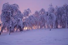 Árboles de pino en nieve del invierno en la niebla fotos de archivo
