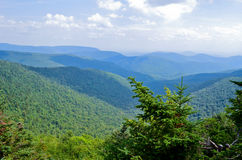 Árboles de pino en una montaña Imagen de archivo libre de regalías