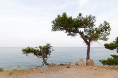 Árboles de pino en una orilla de mar Foto de archivo