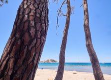 Árboles de pino en una playa en Córcega Imágenes de archivo libres de regalías