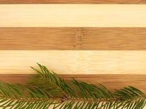 Árboles de pino en una tajadera Fotografía de archivo