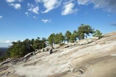 Árboles de pino encima de la montaña Imagen de archivo libre de regalías