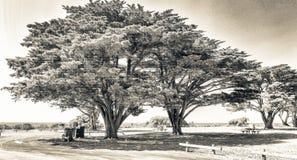 árboles de pino a lo largo del camino, Australia Fotos de archivo libres de regalías