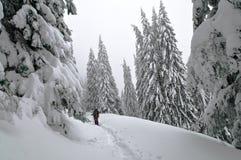 Árboles de pino nevados en las montañas Fotos de archivo libres de regalías