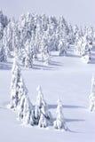 Árboles de pino nevados en montañas Fotografía de archivo