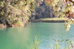 Árboles de pino por el lago en Chiapas, México Imágenes de archivo libres de regalías