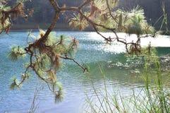 Árboles de pino por el lago en Chiapas, México Imagen de archivo libre de regalías