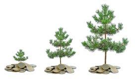 Árboles de pino que crecen de la pila de monedas foto de archivo libre de regalías