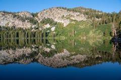 Árboles de pino reflectores del lago tranquilo, perfectamente aún alpino, montañas, y cielo azul fotos de archivo libres de regalías