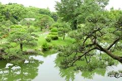 Árboles de pino, sendero, hierbas y río en árboles del gardenPine del zen Fotos de archivo